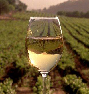 Nation's first Hemp-Infused wine