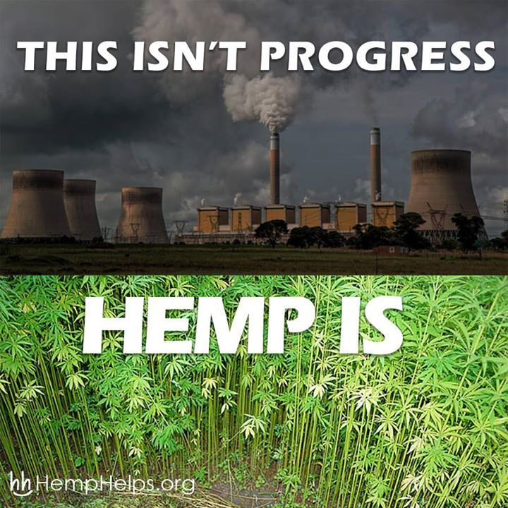 Who in the World is Growing HEMP?