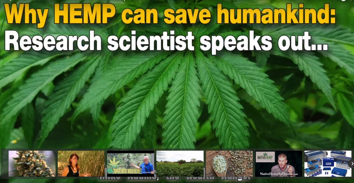 Why HEMP can save humankind: Research scientist speaks out…